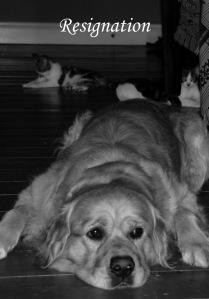household dog oracle - resignation