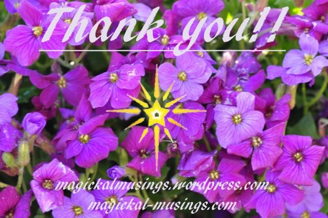 pansies, purple 2012 Ruth Ibbotson