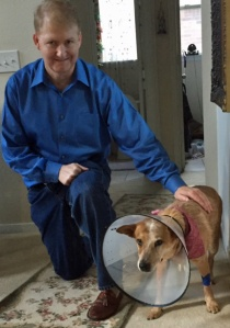 Sheila back home from the vet & a very happy husband to have his beloved dog back home.